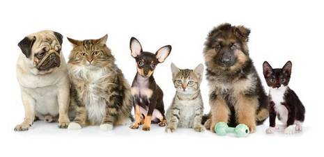Battersea_Dogs_and_Cats_1_full_width