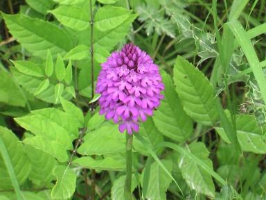 英国・コッツウォルズより愛をこめて-スノー・ヒルで見つけたかわいいお花
