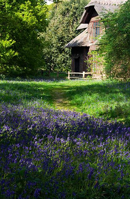 英国アンティークス・オフィシャルブログ-Blue Bells