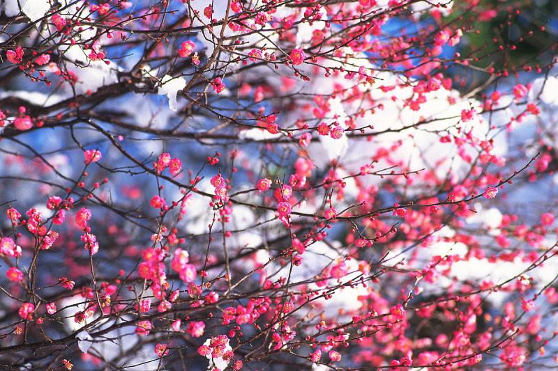 英国アンティークス・オフィシャルブログ-春